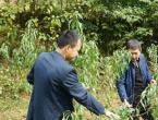 农艺师职称评定个人工作总结三篇