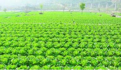 县2020蔬菜产业发展实施网址三篇