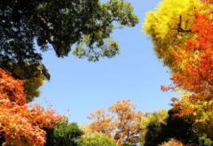 秋分节气 秋分日