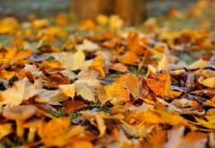秋分诗 秋分的诗