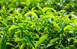 茶叶店加盟合作协议