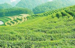 茶叶店加盟合作协议 3篇