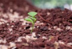 2020年树苗买卖合同范本