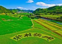 乡村振兴和农业农村现代化心得体会