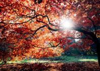 秋天天气转凉早上问候语