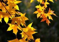 关于立秋的短信