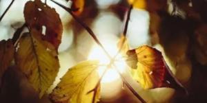 有关秋天的唯美诗句