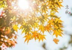 立秋时节给长辈的祝福语